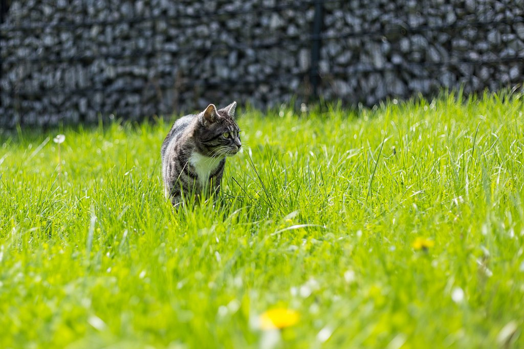 20170424-THECATS-1.jpg