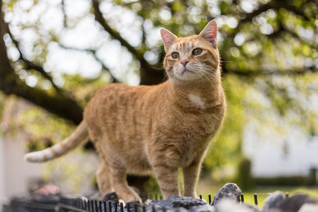 20170424-THECATS-3.jpg